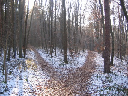 forest-path-cross-roads